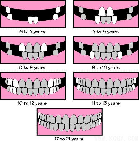 小孩换牙结构图