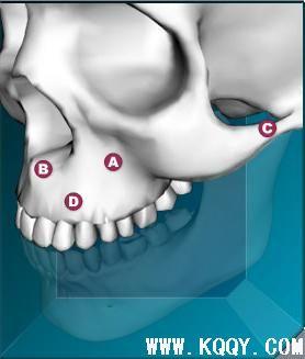 上颌骨三维解剖图